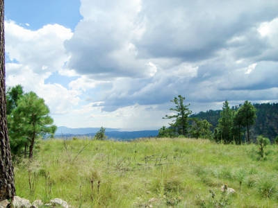 The country around the Mogollon Rim. Green grass, pine trees, mountains, and partly cloudy skies