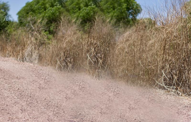 Peavine trail slider background